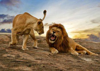 East Africa Safaris