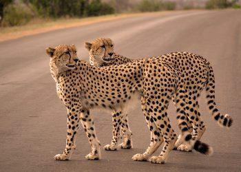 safaris Kenya.